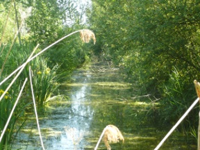 Peupliers bord de l'eau
